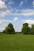 English Pasture — Stock Photo