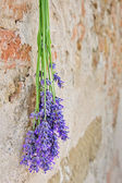 Lavender hanging on a stone wall — Stock Photo