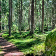 Green forest landscape in the summer — Stock Photo