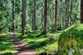 Green forest landscape in the summer — Stockfoto