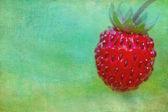 Wild strawberry close-up — Stock Photo