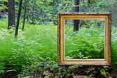 Empty golden frame in nature — Stock Photo