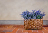 Lavender in a basket — Stock Photo