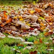 Closeup of autumn leaves — Stock Photo