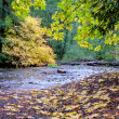 Stock Photo: Autumn leaves next to small forest creek
