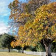 Autumn trees in a park — Stock Photo