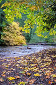 Autumn leaves next to small forest creek — Stock Photo