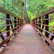 Bridge in rainforest — Stock Photo
