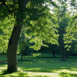Trees in a green park — Stok fotoğraf