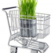 Ecological grocery shopping — Stock Photo
