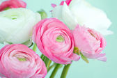 Bouquet of pink and white ranunculus — Stock Photo