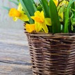 Rustic brown basket full of yellow daffodils — Stock Photo