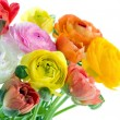 Colorful ranunculus flowers — Stock Photo #23239656