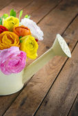 Bouquet of colorful ranunculus on wooden table — Stock Photo