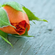 Stock Photo: Orange rosebud on wooden background