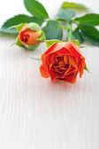 Oranžové růže na bílém pozadí dřevěná — Stock fotografie