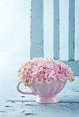 Hydrangea flowers on a vintage chair — Stock Photo