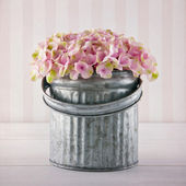 Pink hydrangea flowers in a metal bucket — Stock Photo