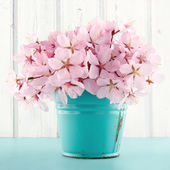 Cherry blossom flower bouquet — Stock Photo