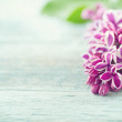 Purple lilacs on vintage blue wooden background — Stock Photo