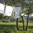 T-shirts and other laundry drying on a clothesline — Stock Photo #32150735