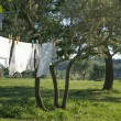 White clean t-shirts drying on a clothesline — Stock Photo
