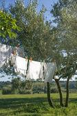 洗衣晒衣绳上干燥 — 图库照片