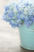 Blue pastel color hydrangea flowers — Stock Photo