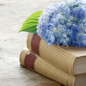 Old books with romantic blue flowers — Stock Photo