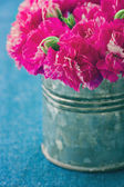 Fuchsia carnation flowers — Stock Photo