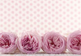 Row of pink roses — Stockfoto