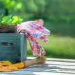 Garden tools in a blue wooden tool box — Stock Photo