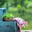 Gardening tools in a blue wooden tool box — Stockfoto #41810613