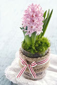 Pink hyacinth flower in a glass vase — Stock Photo