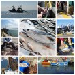 Fish and fishing collage - Stockfoto
