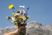 Flowers for you — Stock Photo