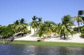 Palma e la spiaggia di jericoacoara, in brasile — Foto Stock