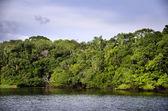Rainforest, Brazil — Stock Photo