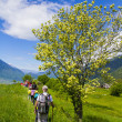 Young hikers trekking with guides — Stock Photo #40004375