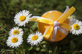 Easter egg and daisies — Stock Photo