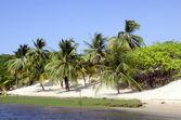 Palms and beach in Jericoacoara in Brazil — ストック写真