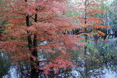 Reddish trees are reflected in water — Stock Photo