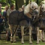 Coach horses — Stock Photo #28930627