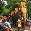 Decorated elephants in parade at annual festival, Varkala, India — Stock Photo #18963865