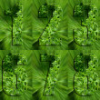 Numbers Made of Parsley - Foto Stock