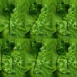 Numbers Made of Parsley - Photo