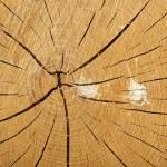 Cross Section Tree Stump with Bird Mess Splatter — Stock Photo