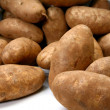 Jumbo Russet Potatoes - Stock Photo