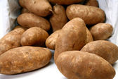 Jumbo Russet Potatoes — Stock Photo