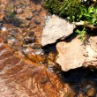 Close Up Of Stream - Stock Photo